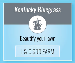 Kentucky Bluegrass | Beautify your lawn | J & C Sod Farm